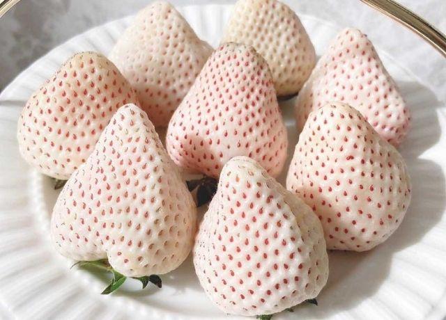 甘くてジューシー♡佐賀県の白いイチゴ【天使の苺】